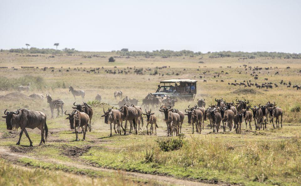 Masai-Mara-National-Reserve-We