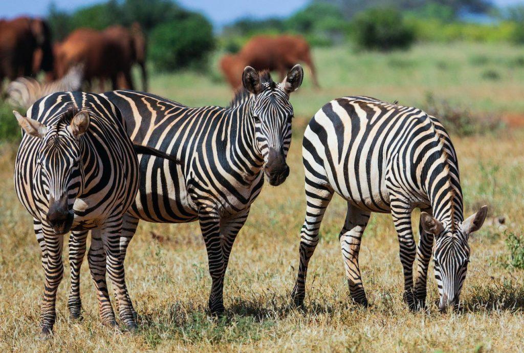 Tsavo-East-National-park