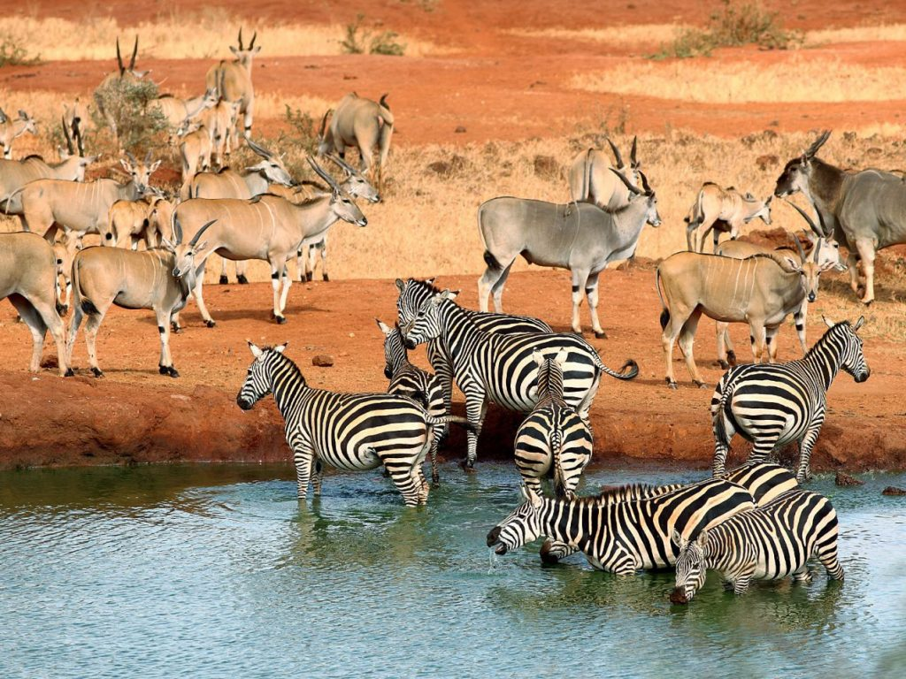 Tsavo-National-Park_compressed