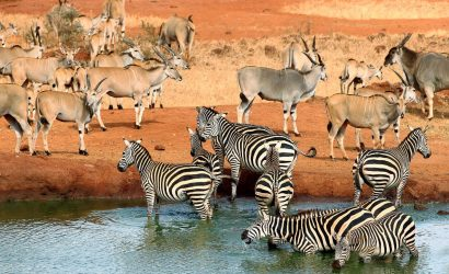 animals in a watering hole in africa
