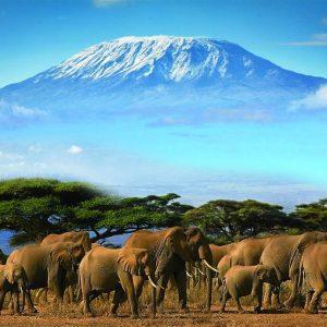 elephants in amboseli national park and mount kilimanjaro background