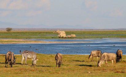 animals at lake nakuru national park
