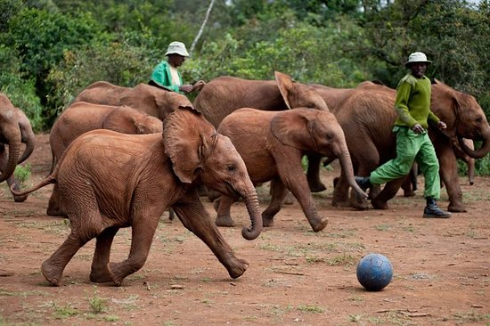 david-sheldrick-wildlife