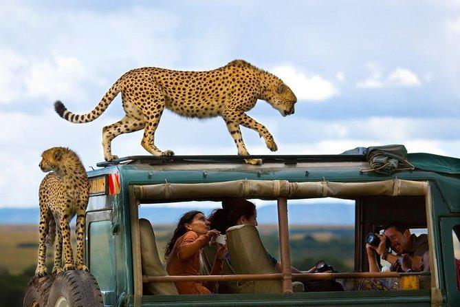 masai mmara