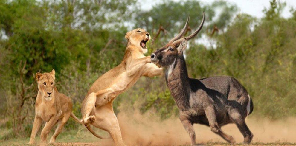 masaii mara