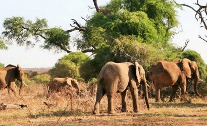 elephants at samburu reserve